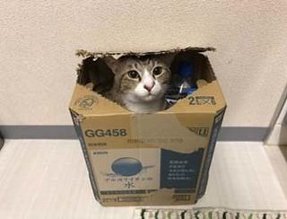 箱好き.jpg