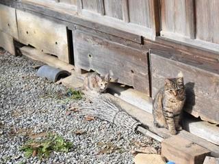 2匹家の外.jpg