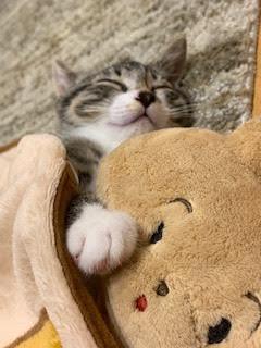 おやすみ.jpg