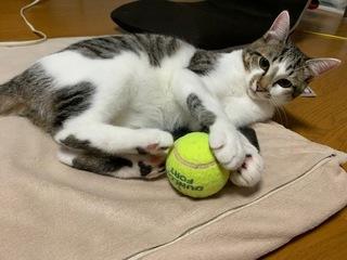 テニスボール.jpeg