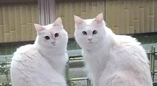 ブルー&ルビー.jpg
