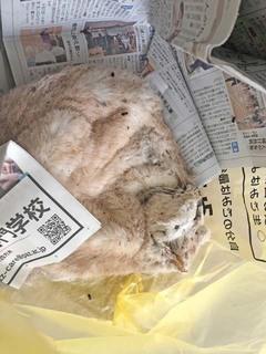 新聞と遺体.jpg