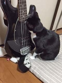 楽器と密談ができるハク子氏.JPG