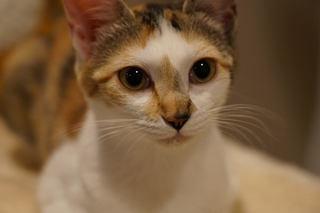 美猫こなちゃん.jpg